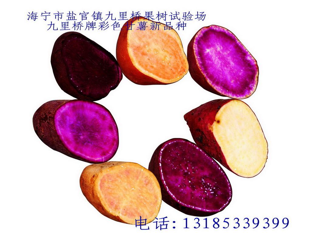 供应紫甘薯、...