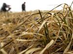 抗击罕见旱灾 中国首次启动一级应急响应