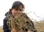 中国遭遇30年不遇旱情 1.57亿亩小麦受旱