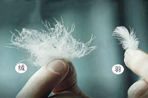 羽絨制品的應用范圍